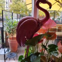 Magic Flamingo!